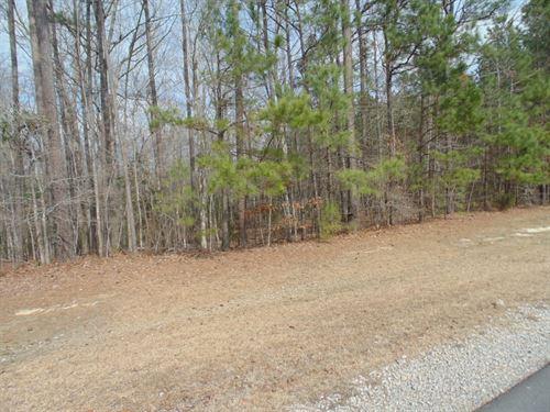 Wooded Acreage, Winton, North : Winton : Hertford County : North Carolina