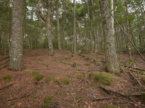 Maine Lakefront Land in Lakeville : Lakeville : Penobscot County : Maine