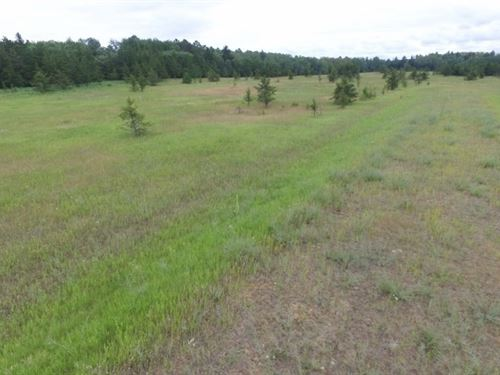 3.5 Acres In Park Rapids, MN : Park Rapids : Hubbard County : Minnesota
