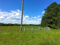 7.75 Acres Land For Sale Camden Co : Woodbine : Camden County : Georgia