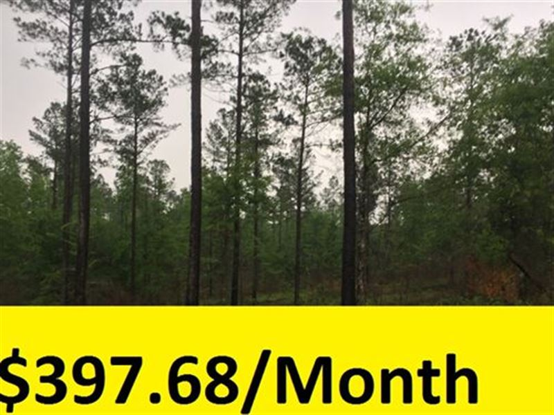 Large Private Wooded Lot : Hephzibah : Burke County : Georgia