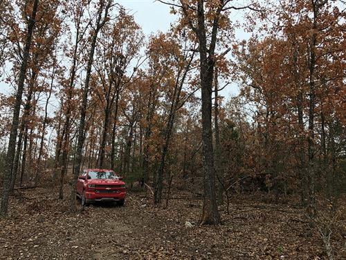 11 Acres Great For Hunting : Ava : Douglas County : Missouri