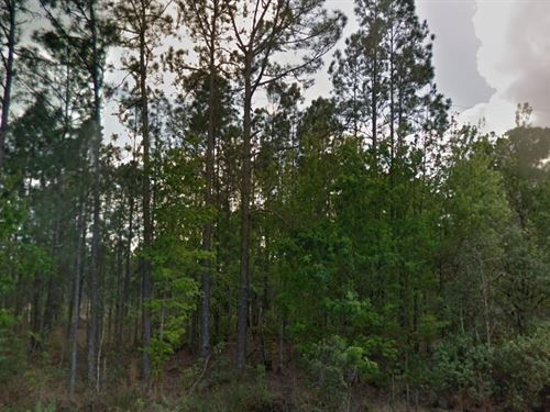 Polk County, Fl $12,500 Neg, Both : Polk City : Polk County : Florida