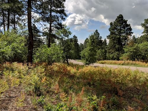 One Acre, Pine-Filled Mountain Land : Bayfield : La Plata County : Colorado