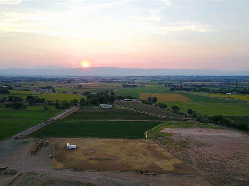 Western Colorado Winery, Vineyard : Olathe : Montrose County : Colorado