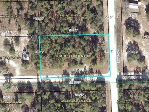 Vacant Land, Home Site, Gilchrist : Bell : Gilchrist County : Florida