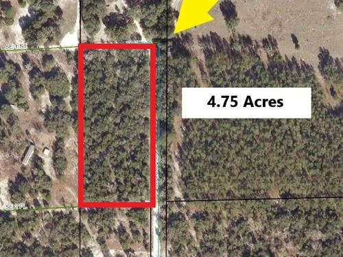 Wooded Corner Lot Gilchrist County : Trenton : Gilchrist County : Florida