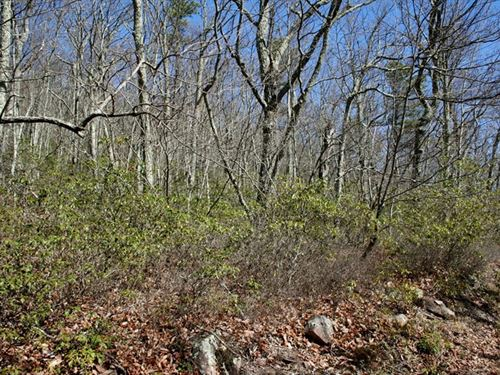 5 Ac, To Build Your Cabin/Highland : Monterey : Highland County : Virginia