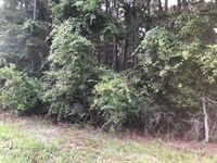 2+ Wooded Acre Lot 776392 : Chiefland : Levy County : Florida