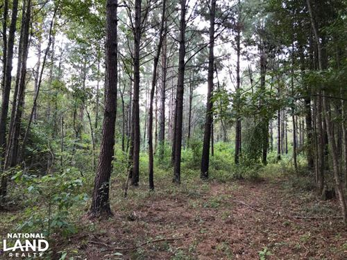 Hunting And Timber Tract Near Bassf : Bassfield : Jefferson Davis County : Mississippi