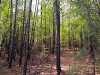 6.47 Acres, Fairfield County : Jenkinsville : Fairfield County : South Carolina