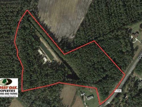 16 Acres of Hunting And Timber Lan : Hallsboro : Columbus County : North Carolina