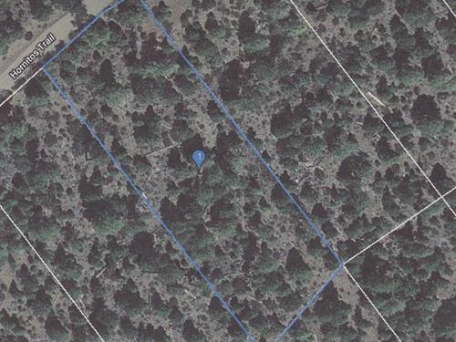 Lot California Pines, Modoc County : Alturas : Modoc County : California