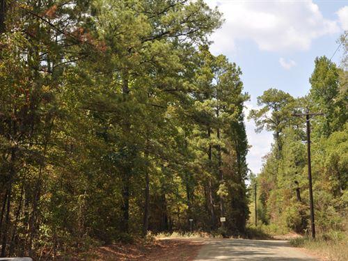 3.9 Ac Cr 2150 : Woodville : Tyler County : Texas