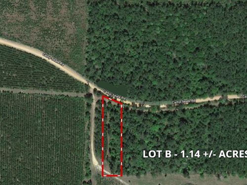 Off The Grid, Discount Land In Tx : Livingston : Polk County : Texas