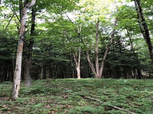 Florence Woods : Florence : Oneida County : New York