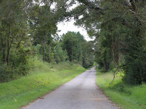 18 Acres In Jones County : Soso : Jones County : Mississippi