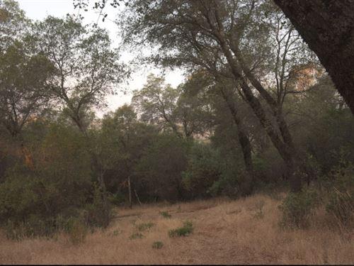 Californias Best A 3 Acres Lot : Grass Valley : Nevada County : California