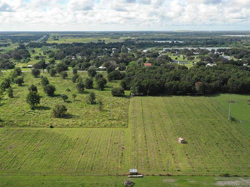 Bartow Former Blueberry Farm : Bartow : Polk County : Florida