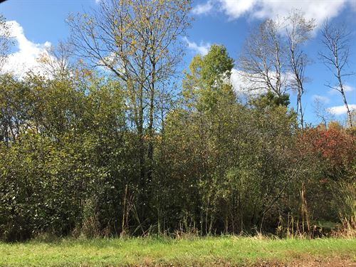 19+ Acres Within City Limits Kettle : Kettle River : Carlton County : Minnesota