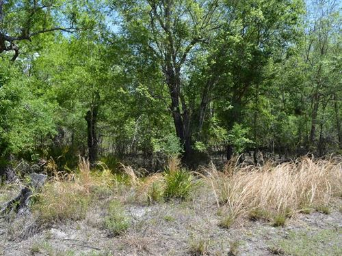 One Acre Close TO Boat Ramp : Bell : Gilchrist County : Florida