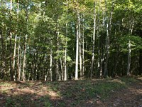 5.03 Secluded Acres, Wooded : Galax : Grayson County : Virginia