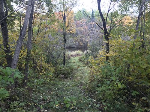 4.75 Wooded Acres On Tomahawk River : Cassian : Oneida County : Wisconsin