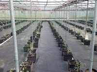Haines City Greenhouse Nursery : Haines City : Polk County : Florida