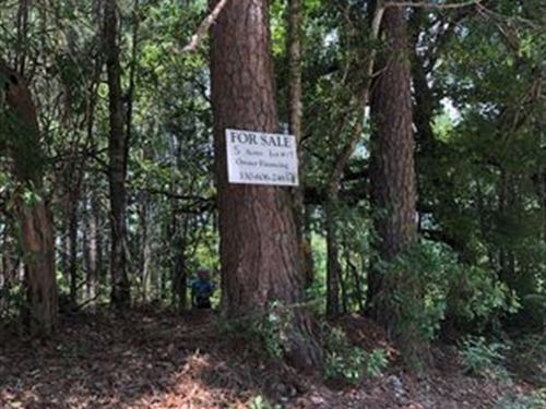 5 Wooded Acres : Saint Matthews : Calhoun County : South Carolina