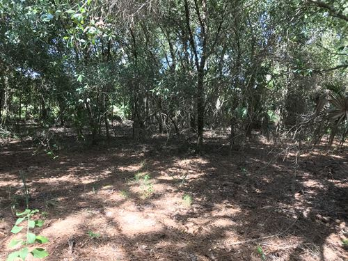 Affordable Land Camping, Investment : North Port : Sarasota County : Florida