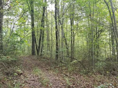 3.38+/- Acres Nice Wooded Tract : South Pittsburg : Marion County : Tennessee