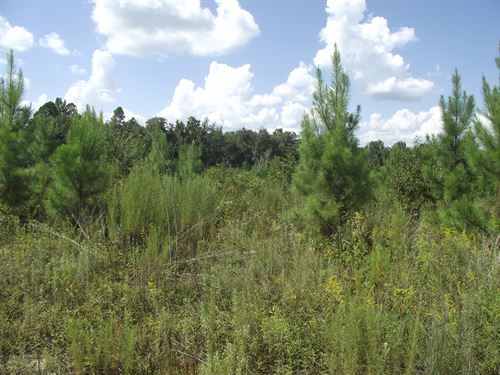 Summertown Country Estates Lot 17 : Summertown : Emanuel County : Georgia