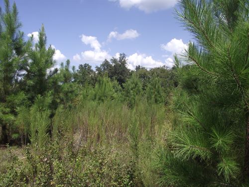 Summertown Country Estates Lot 9 : Summertown : Emanuel County : Georgia
