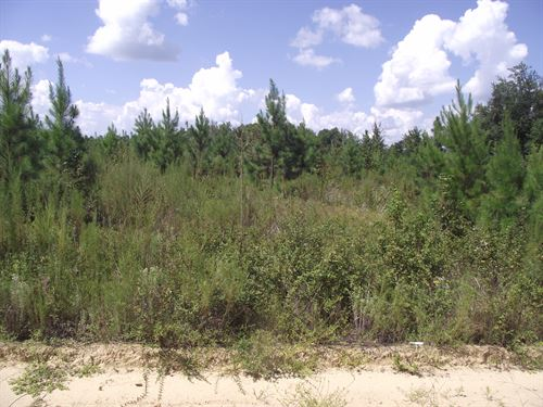 Summertown Country Estates Lot 8 : Summertown : Emanuel County : Georgia