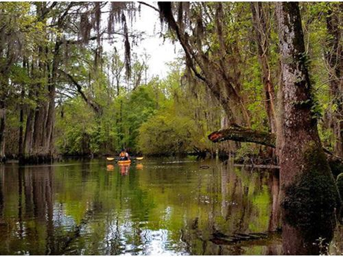 Coming Soon, Charlands Pines : Maxton : Robeson County : North Carolina