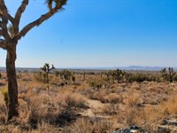 Fear And Loathing In La County : Llano : Los Angeles County : California