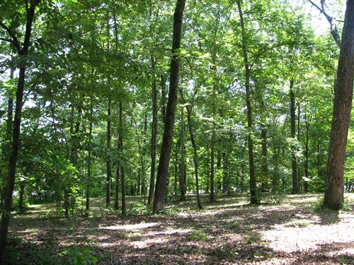 Lot Adamsville Tn, Dickey Woods : Adamsville : McNairy County : Tennessee