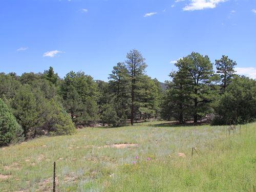 Land in Cotopaxi Colorado : Cotopaxi : Fremont County : Colorado
