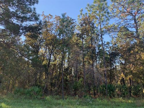 Wide Buildable Lot High And Dry : Weeki Wachee : Hernando County : Florida