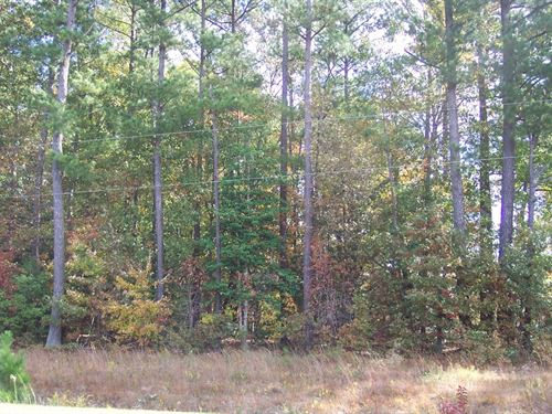 Wooded Residential Lot Hertford : Cofield : Hertford County : North Carolina