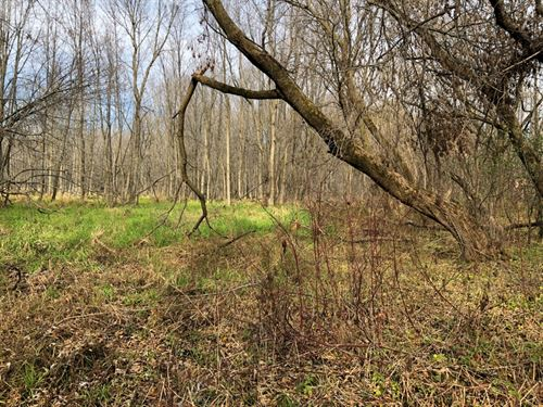 Heavily Wooded Parcel : Oostburg : Sheboygan County : Wisconsin