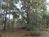 1.13 Ac Home Site With Well : Keystone Heights : Clay County : Florida
