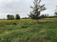 Secluded Buildable Acreage : Belgium : Ozaukee County : Wisconsin