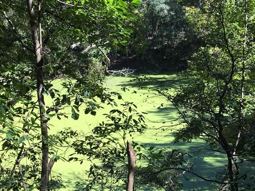 Truly Unique, 4.11 Acres River : Live Oak : Suwannee County : Florida