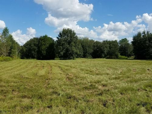 Great 5 ac Area For Horses : McAlpin : Suwannee County : Florida