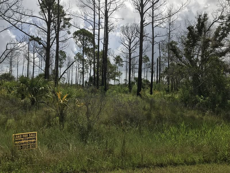 Backs Up To 6000 Ac Nature Preserve : North Port : Sarasota County : Florida