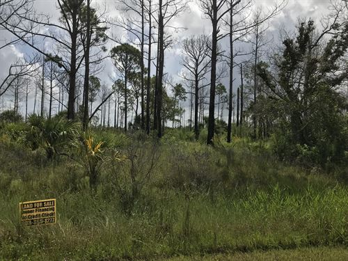 Backs Up To 6000 Ac Nature Preserve : North Port : Sarasota County : Florida