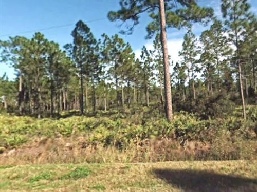 Flagler County, 1.13 Acres 35K Neg : Bunnell : Flagler County : Florida