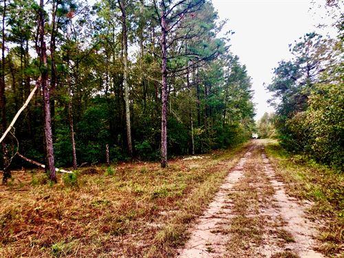 Hunting Property Craven County NC : Vanceboro : Craven County : North Carolina