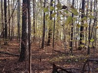 Wooded 17.5+/- Acres : Heflin : Cleburne County : Alabama